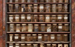 Salvadoriana_pots_de_farmacia_JordiVidal